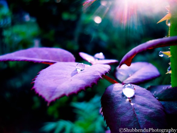 rain drops......through my lens...