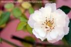 ©ShubhenduPhotography | www.shubhenduphotography.weebly.com