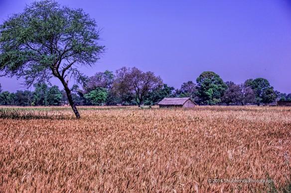 Landscapes © 2014 ShubhenduPhotography