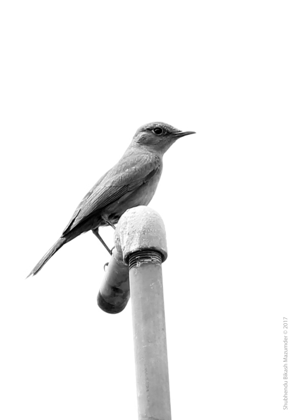The Brown Rock Chat Image converted in Adobe Photoshop Canon 550D F/6.3, 1/320sec., ISO-200 Focal Length:135mm No Flash